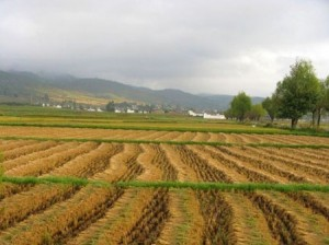 agritourism-benefits-harvest-in-Lijiang-China-450x337
