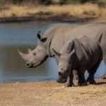 My $20 Toward Hope For Rhinos (and Travel Prizes!)